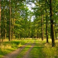На Івано-Франківщині прокуратура повернула державі 4,2 га землі лісового фонду