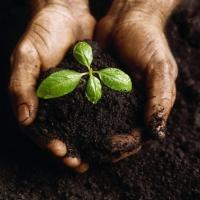 У Франківську підприємець заплатить 170 тис грн за незаконне користуваня землею