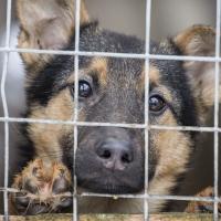 Франківська міська рада профінансує будівництво притулку для тварин
