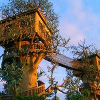 В Україні працює компанія, яка будує будинки на деревах (Відео)