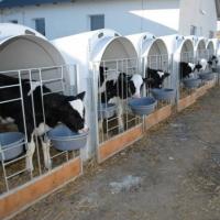 На Прикарпатті побудують новий м'ясопереробний завод за 4 млн євро