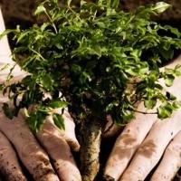 Влада Івано-Франківська планує витрати понад мільйон гривень на озеленення міста