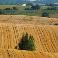 З 1 лютого Держгеокадастр розпочинає передачу сільськогосподарських земель до власності об'єднаних територіальних громад