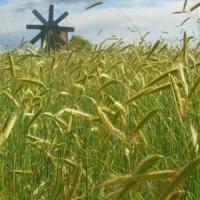 Українці зможуть обмінювати земельні ділянки