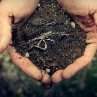 Земельне управління підвело підсумки земельних торгів за серпень
