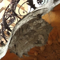 У Франківську за тиждень обвалились елементи фасадів трьох старовинних будинків. ВІДЕО