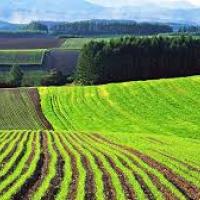 Яким буде ринок землі в Україні