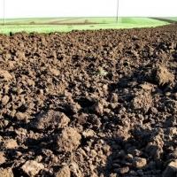 В Україні дозволять продавати право оренди на землю