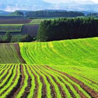 Міністр економіки розповів, куди підуть гроші від продажу землі