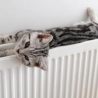 У Франківську зросте вартість на центральне опалення (ВІДЕО)