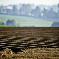 Експерти розповіли, як зросте ціна на землю на старті реформи