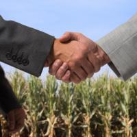 На Прикарпатті за пів року продано право оренди на 22 земельні ділянки