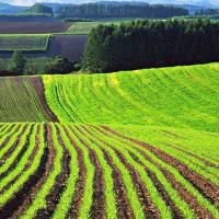 Як українці ставляться до ринку землі. ІНФОГРАФІКА