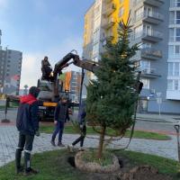 Скоро Новий рік: в ЖК Паркове містечко» садять ялинки. ФОТО