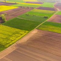 Стало відомо, скільки земельних ділянок продали в Івано-Франківській області
